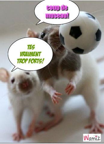rat qui joue au ballon, lolcats réalisé sur Wamiz