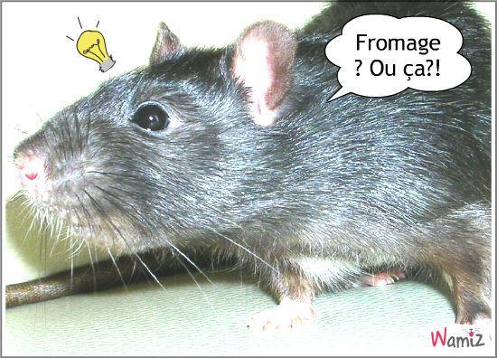 Rattou !, lolcats réalisé sur Wamiz