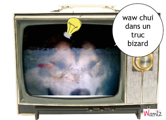 tele, lolcats réalisé sur Wamiz