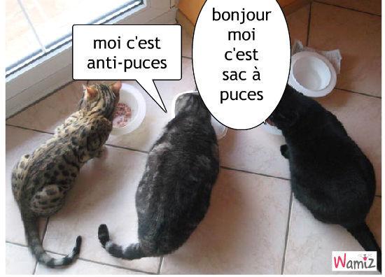 repas des chats, lolcats réalisé sur Wamiz