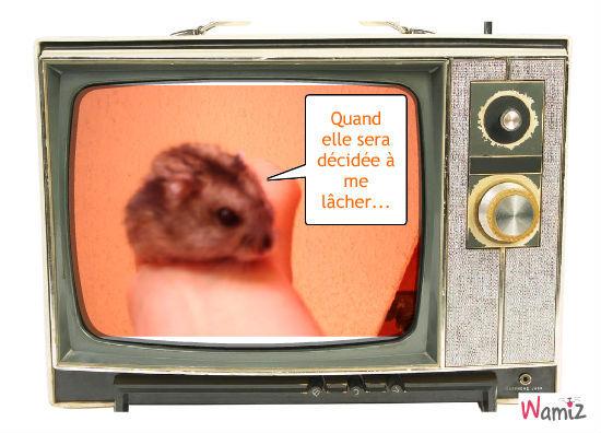 hamster fun, lolcats réalisé sur Wamiz