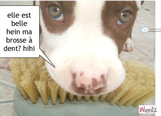 brosse à dent multi usage, lolcats réalisé sur Wamiz