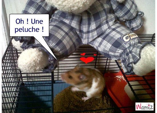 Peluche hamster, lolcats réalisé sur Wamiz