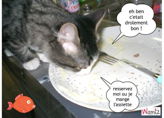à table !!!, lolcats réalisé sur Wamiz
