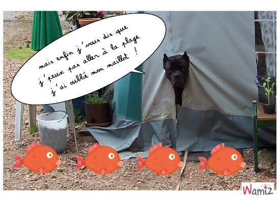 Virus au camping, lolcats réalisé sur Wamiz