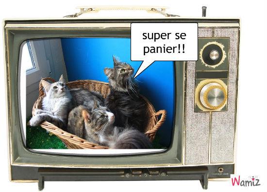 un panier a la télé, lolcats réalisé sur Wamiz