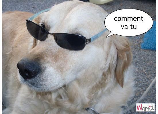 lunette, lolcats réalisé sur Wamiz