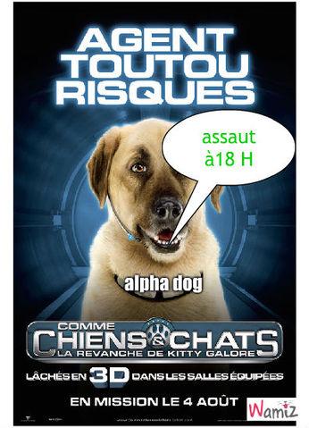 alpha dog, lolcats réalisé sur Wamiz