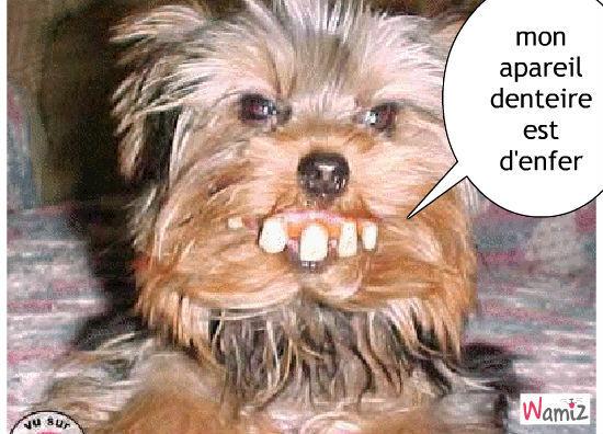 apareil denteireapareil denteire, lolcats réalisé sur Wamiz