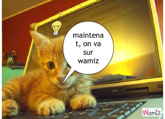 wamiz.fr, lolcats réalisé sur Wamiz