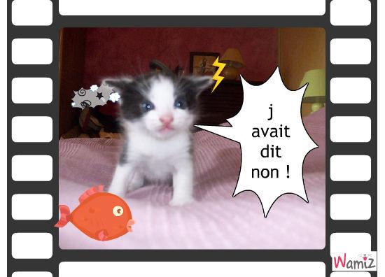 chaton enerver, lolcats réalisé sur Wamiz