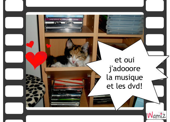 moi et les cd, lolcats réalisé sur Wamiz