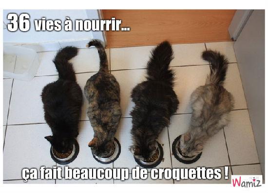 9 vies de chat, lolcats réalisé sur Wamiz