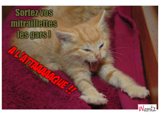 La guerre de chatons, lolcats réalisé sur Wamiz