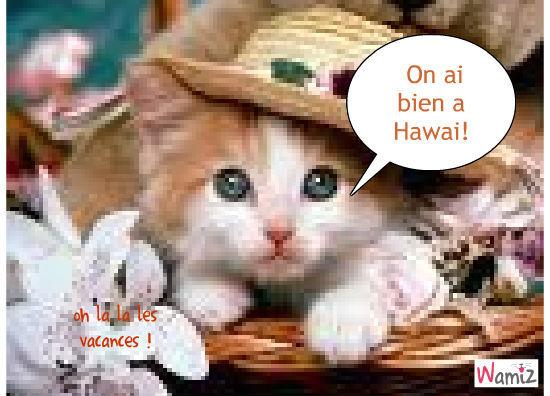 Chat à Hawai, lolcats réalisé sur Wamiz