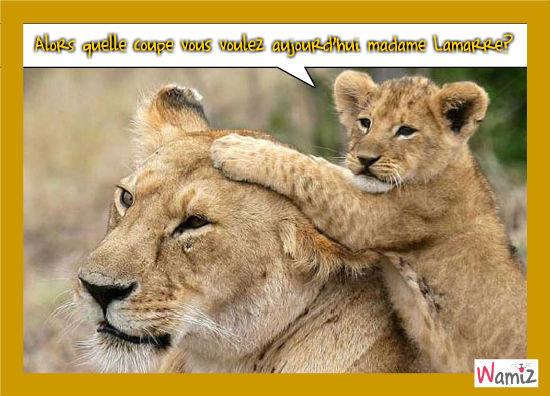 La salon de coiffure d'un lionceau, lolcats réalisé sur Wamiz