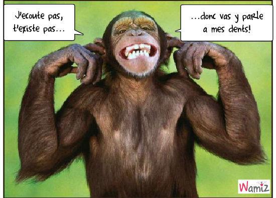 Parle à mes dents!, lolcats réalisé sur Wamiz