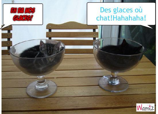 Chat glassovaure, lolcats réalisé sur Wamiz