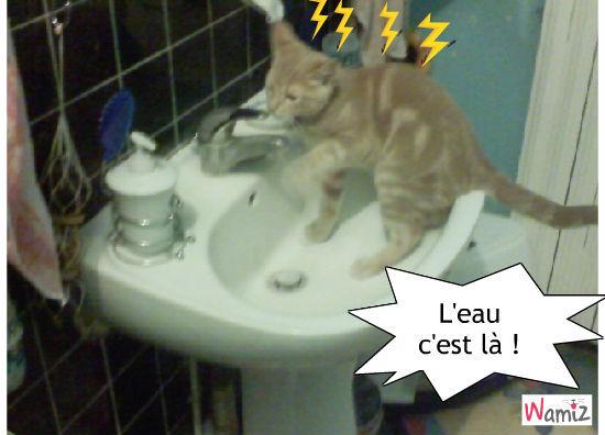 Tu sais ouvrir un robinet ?, lolcats réalisé sur Wamiz