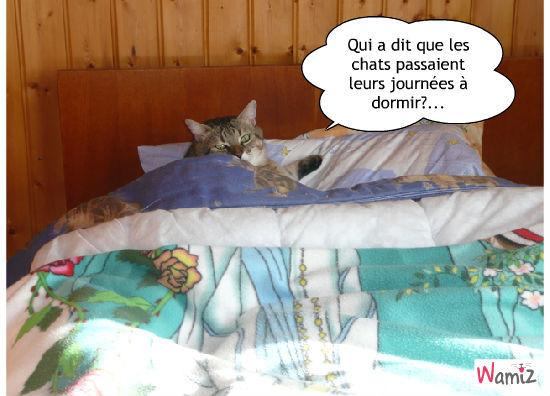 Qui a dit que les chats passaient leurs journées à dormir?..., lolcats réalisé sur Wamiz