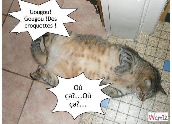 C'est l'heure du repas pour Gougou !, lolcats réalisé sur Wamiz