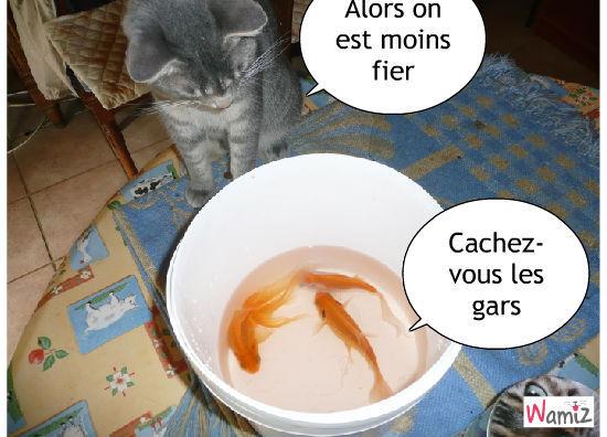 les poissons, lolcats réalisé sur Wamiz
