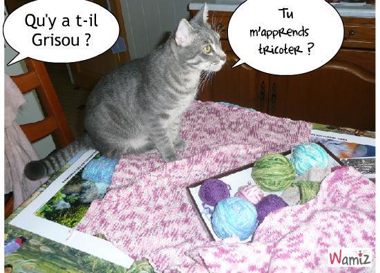 le tricot, lolcats réalisé sur Wamiz