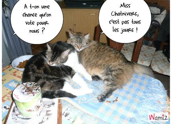 miss chatunivers, lolcats réalisé sur Wamiz