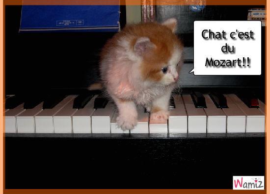 Chat c'est du Mozart !, lolcats réalisé sur Wamiz