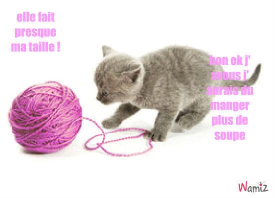 petit chaton, lolcats réalisé sur Wamiz
