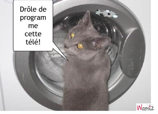 programme télé /lavage, lolcats réalisé sur Wamiz