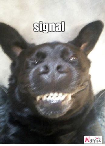 signal, lolcats réalisé sur Wamiz