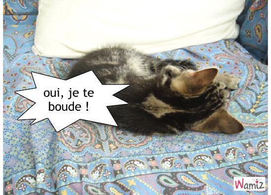 les chats boudent en dormant ?, lolcats réalisé sur Wamiz