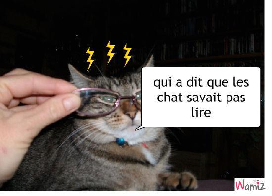chat lecteur, lolcats réalisé sur Wamiz