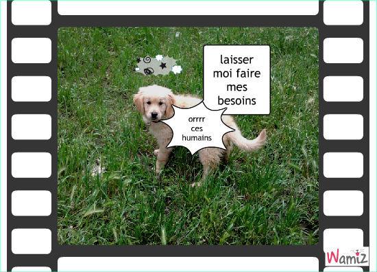 ce que les chiens pense des humains, lolcats réalisé sur Wamiz