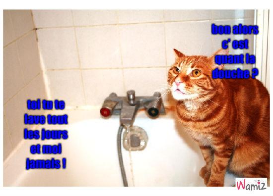 douche, lolcats réalisé sur Wamiz