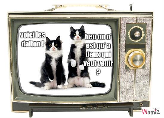 dalton chat, lolcats réalisé sur Wamiz