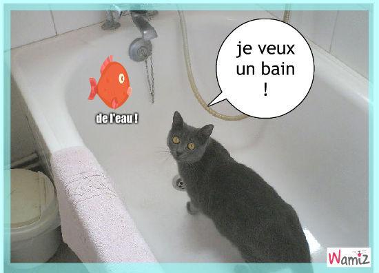 bain pour le chat, lolcats réalisé sur Wamiz