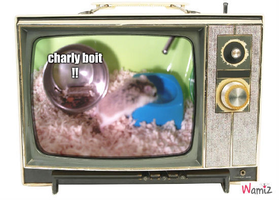 Charly, lolcats réalisé sur Wamiz