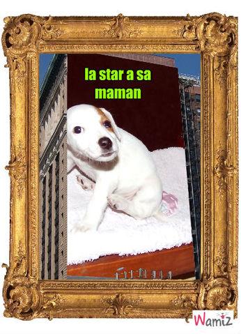 princesse star, lolcats réalisé sur Wamiz