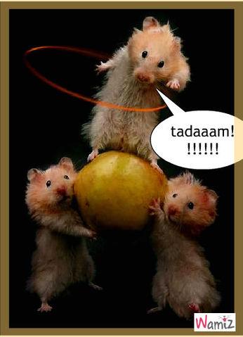 tadaaaa!!!!, lolcats réalisé sur Wamiz