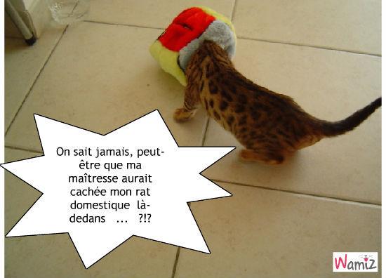 C'est pire que les chats qui voient du caviard, lolcats réalisé sur Wamiz
