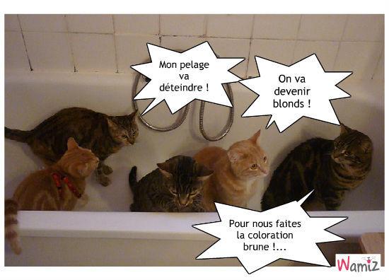 Les inconvénients du bain. façon chat., lolcats réalisé sur Wamiz