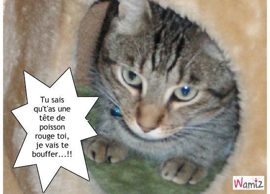 Sympa le chat, et pourquoi pas une mémoire de cet écaillé!..., lolcats réalisé sur Wamiz