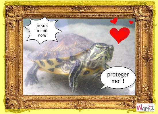 la tortue, lolcats réalisé sur Wamiz