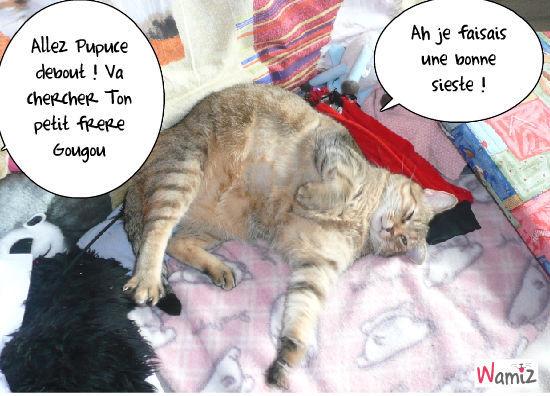 la sieste de Pupuce, lolcats réalisé sur Wamiz
