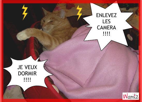 La sieste c'est sacrée !!!, lolcats réalisé sur Wamiz