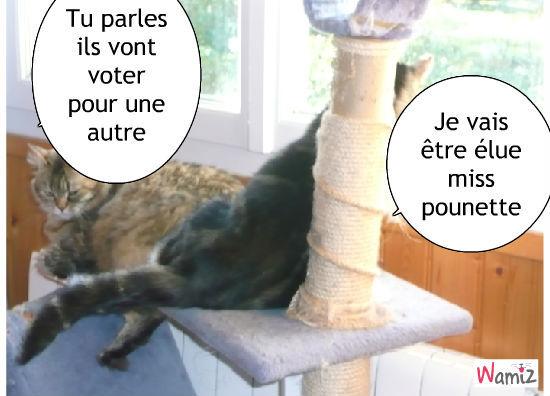 l'élection, lolcats réalisé sur Wamiz