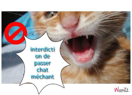 chat méchant, lolcats réalisé sur Wamiz