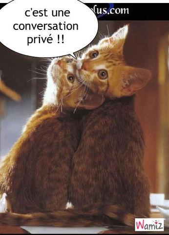 conversation privé de chats, lolcats réalisé sur Wamiz